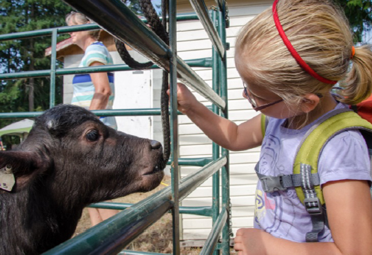 Calf girl